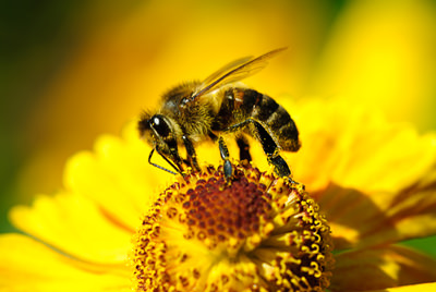 Bee Removal Las Vegas NV