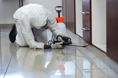 Commercial Pest Control Service Interior Las Vegas