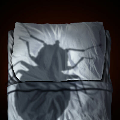 Think You Have Bed Bugs Call Ranger Pest Control