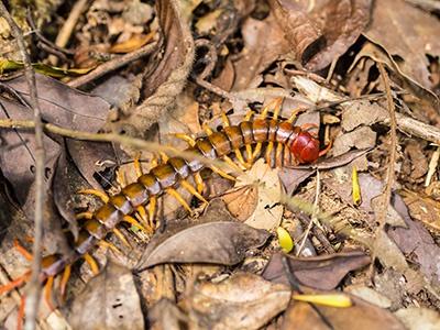 Centipede In Las Vegas NV Home