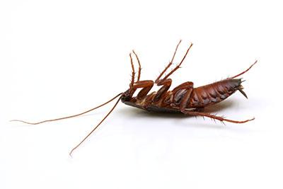 Pest Control Dead Cockroack Las Vegas NV