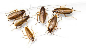 Ranger Pest Control Family Picture Las Vegas NV
